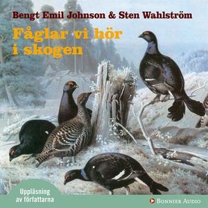 Fåglar vi hör i skogen : dygnet runt i skogen (