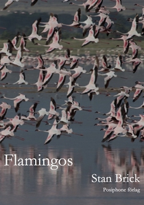 Flamingos (e-bok) av Stan Brick