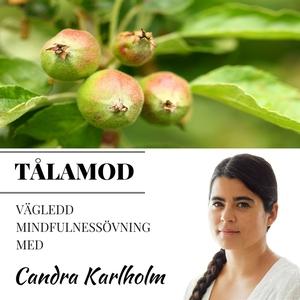 Mindfulness Tålamod (ljudbok) av Candra Karlhol