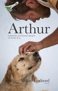 Arthur : Gatuhunden som lämnade djungeln och hi
