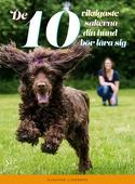 De 10 viktigaste sakerna din hund bör lära sig