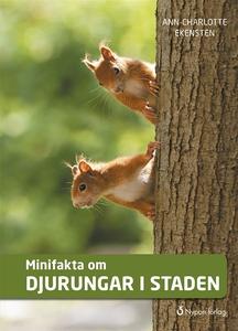 Minifakta om djurungar i staden (e-bok) av Ann-
