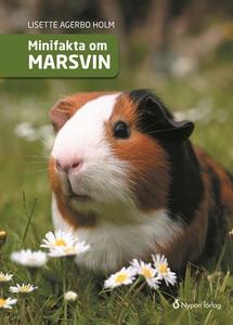 Minifakta om marsvin (e-bok) av Lisette Agerbo