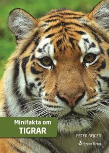 Minifakta om tigrar (e-bok) av Peter Bejder