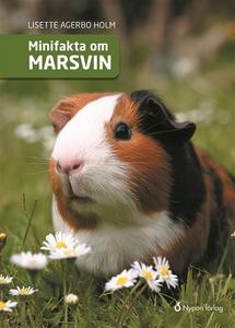 Minifakta om marsvin (ljudbok) av Lisette Agerb