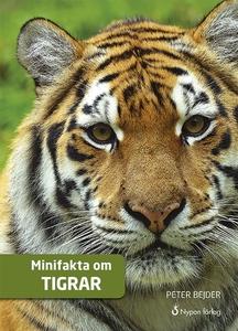 Minifakta om tigrar (ljudbok) av Peter Bejder