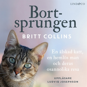 Bortsprungen: En älskad katt, en hemlös man och