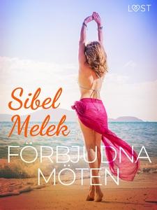 Förbjudna möten - erotisk novell (e-bok) av Sib