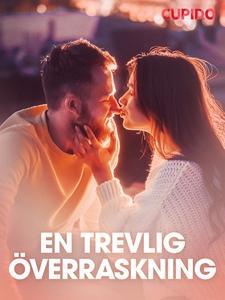 En trevlig överraskning – erotisk novell (e-bok
