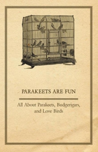 Parakeets are Fun - All About Parakeets, Budger