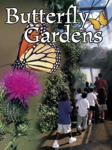 Butterfly Gardens (e-bok) av Jennifer Gillis