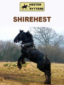Shirehest (ebok) av Susan Morris