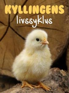 Kyllingens livssyklus (ebok) av Pamela Morris