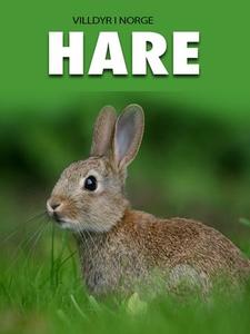 Hare (ebok) av Marte Østmoe