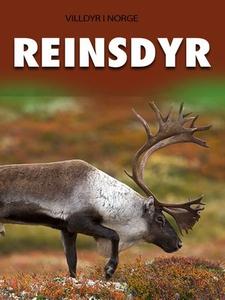 Reinsdyr (ebok) av Camilla Johnsson