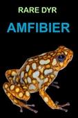 Amfibier