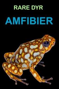 Amfibier (ebok) av Edward Alan Kurtz