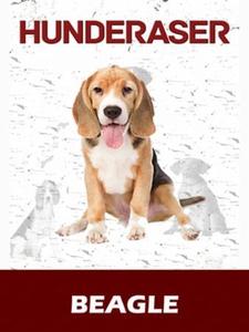 Beagle (ebok) av Susan Miller
