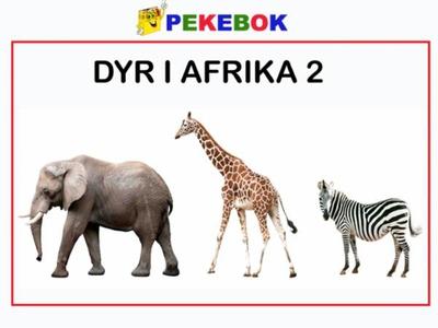Dyr i Afrika 2 (ebok) av Ukjent