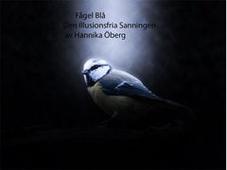 Fågel Blå