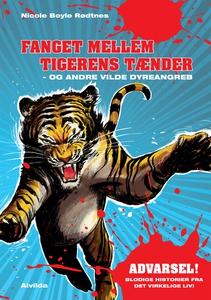 Fanget mellem tigerens tænder - og an